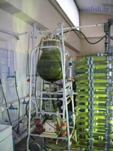 Фотореактор для выращивания микроводорослей хлореллы