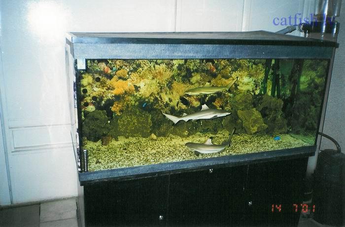 Выращивание акул в аквариуме.