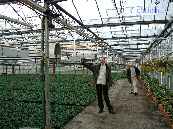 Теплицы по голландской технологии в россии